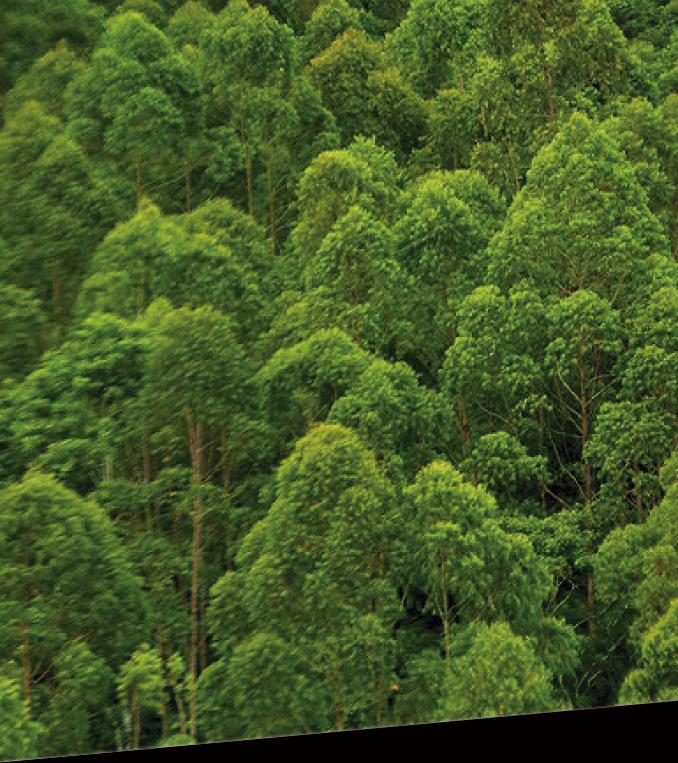 Certyfikowane lasy